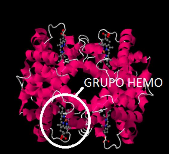 Desoxihemoglobina, hemoglobina no unida al oxígeno: detalle del grupo hemo