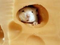Un ratón llamado CO2: agujeros en el queso