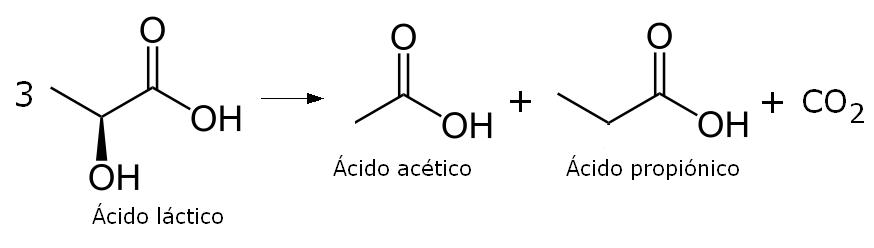 Reacción de fermentación del ácido láctico en el queso emmental
