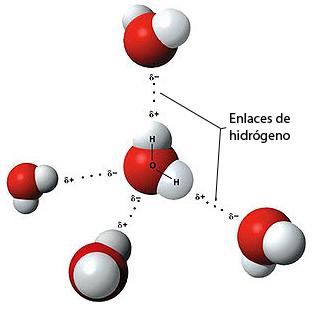 Enlaces de hidrógeno entre moléculas de agua
