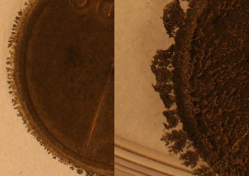 Moneda de cobre sumergida en nitrato de plata: reacción redox