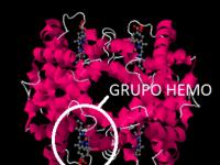 grupo-hemo-hemoglobina