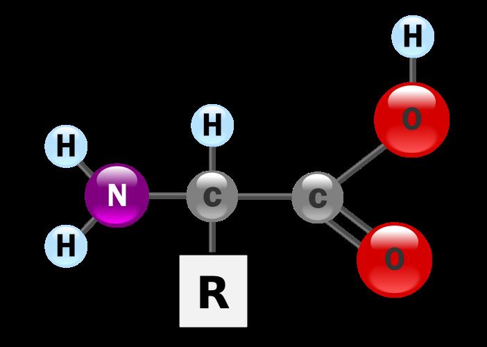 Alfa-aminoácido: grupo amino y grupo carboxílico