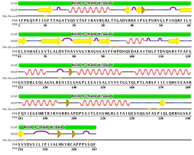 Secuencia de aminoácidos de la cadena A de la ricina