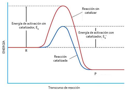 Reacción con catalizador: disminución de la energía de activación