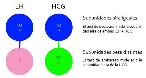 Test de ovulación aplicado al embarazo: LH y HCG