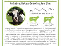 Reducir las emisiones de metano alimentando a los rumiantes